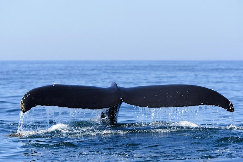 Full Day Hermanus & Whale Watching Day Tour