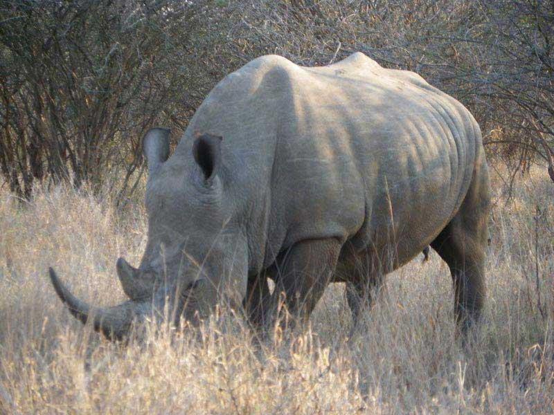 Garden Route Tour & Big 5 Kruger Park Safari Tour