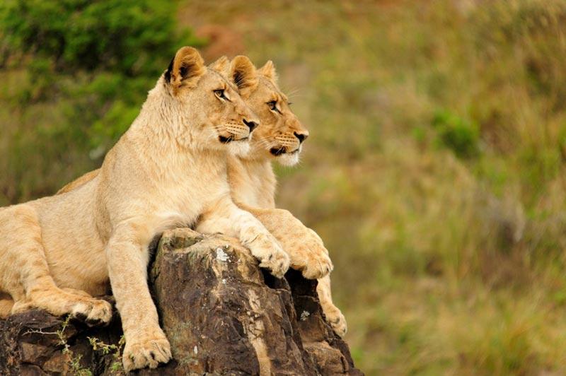Cape Town, Garden Route & Malaria-Free Eastern Cape Safari Tour