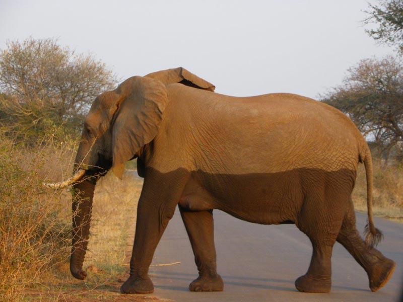 Garden Route & Big 5 Kruger Park Safari Tour Guided Tour