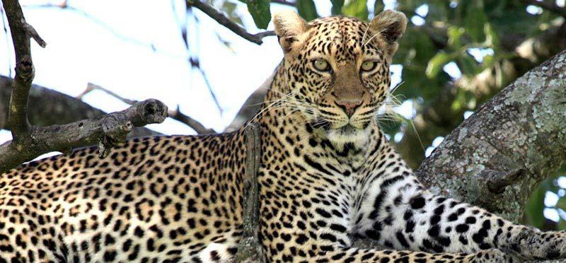 Big 5 Kruger Park Safari For 4 Days Tour