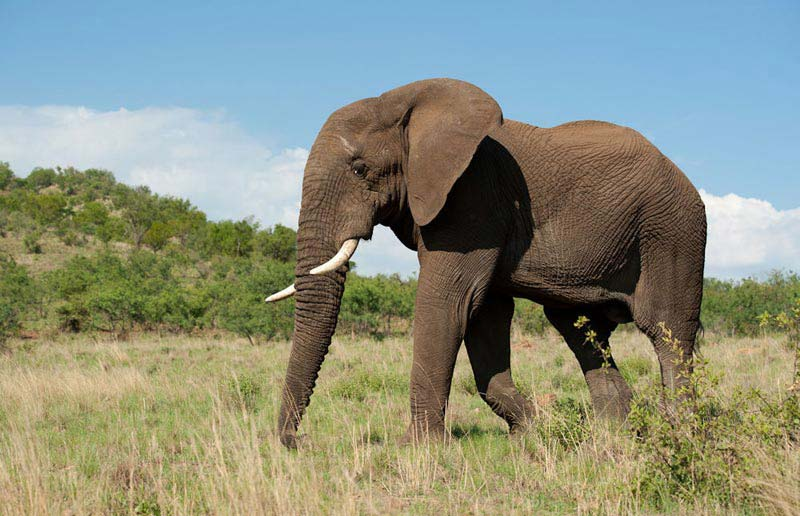 Pilanesberg Big 5 Safari Tour