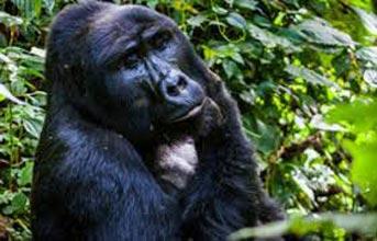 Uganda Wildlife Safari TourKampala