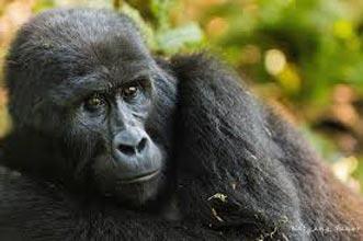 Best Uganda Safari Tour