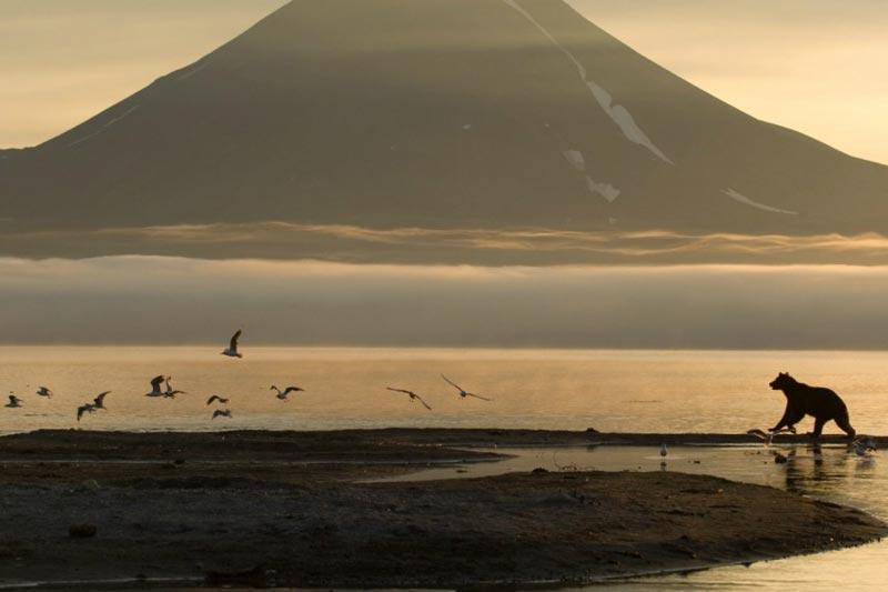 Kamchatka: Kingdom Of Brown Bears Package