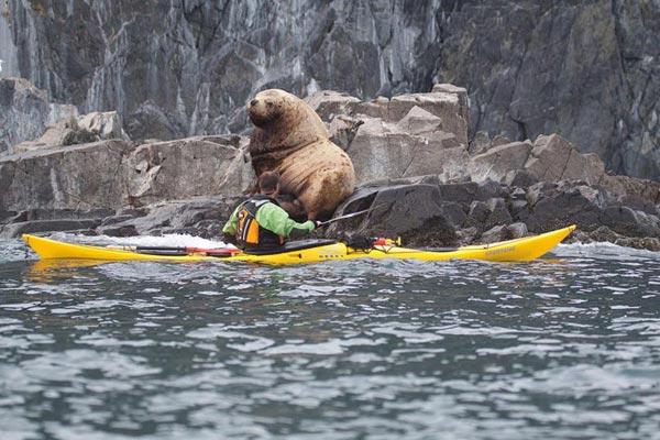 Sea Kayaking In Kamchatka Package