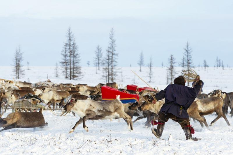 Reindeer Migration With The Nenets In Yamal Package
