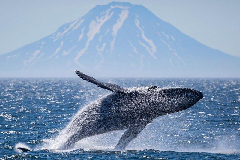 Cruise Kuril Islands & Kamchatka Package
