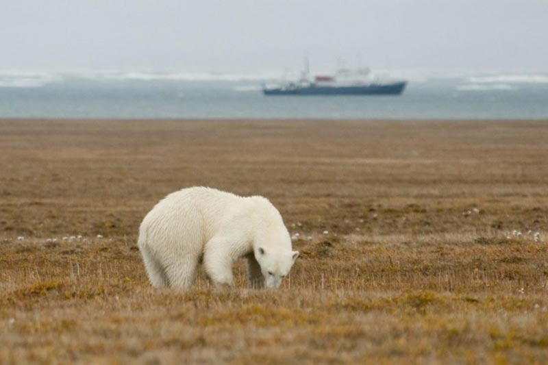 Wrangel Island Cruise – An Arctic Expedition Package