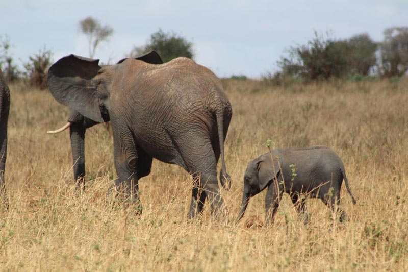 Days Wildlife Safari Tour Package