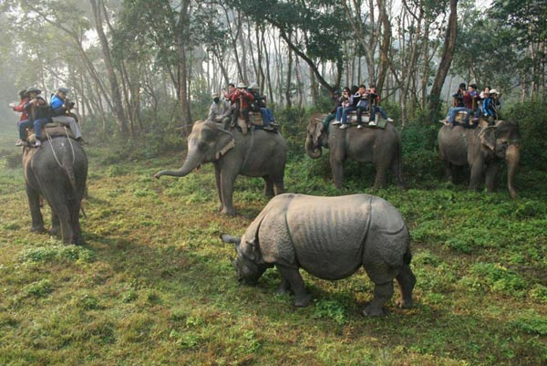 Kathmandu And Chitwan Tour Package