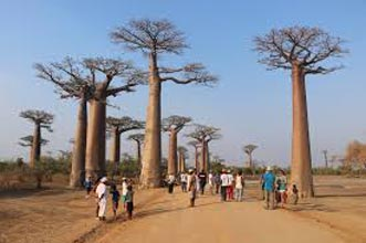 Baobabs And Tsingys Tour