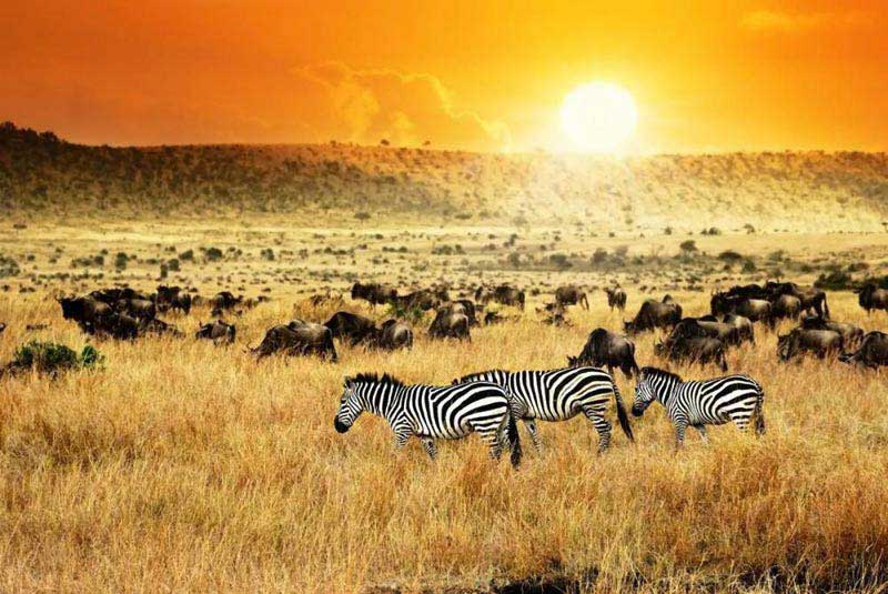 Exciting Kenya Package