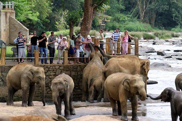 Sri Lanka Splendour Package