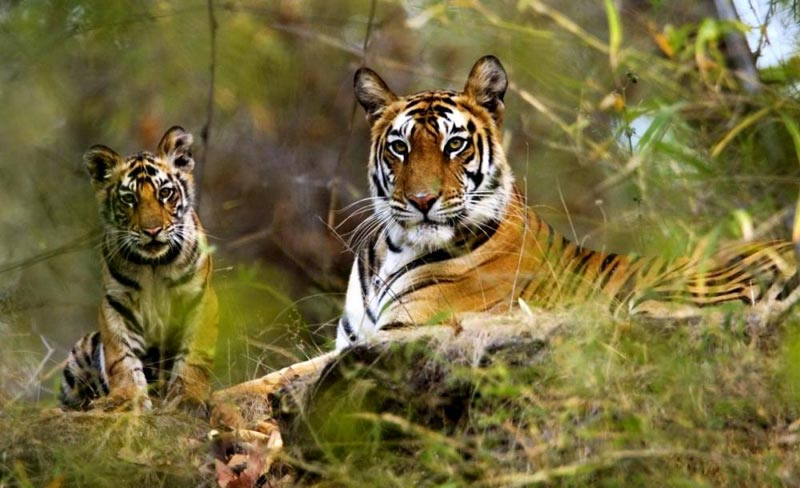 Central India Wilflide Package