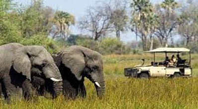 Botswana Into The Wilderness Tour