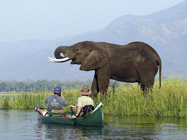 Okavango, Victoria Falls And Zimbabwe Safari Tour
