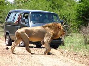 Iconic Africa Safari Tour