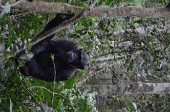 15 Day Gorilla Safaris & Wildlife To Uganda Tour
