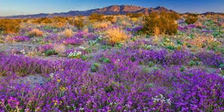 Wonderful Western Wildflowers Tour