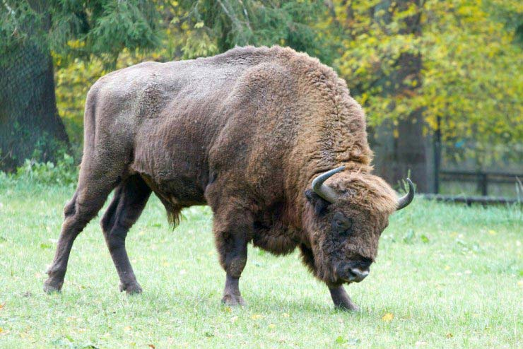 Bialowieza National Park Tour From Warsaw Package