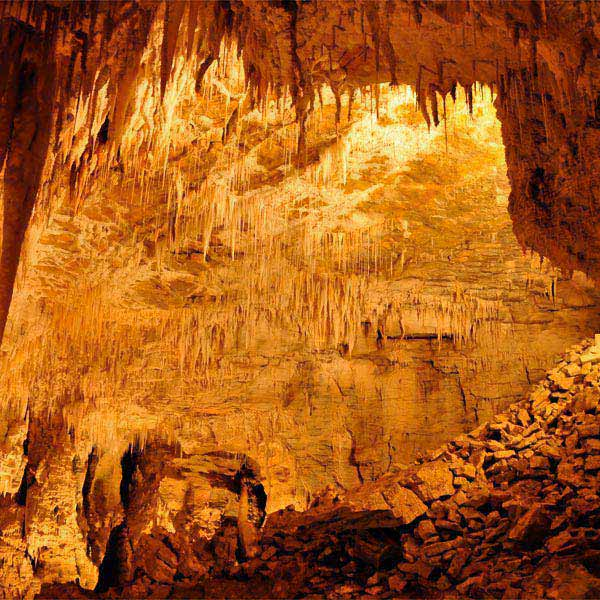 Waitomo Caves Day Tour