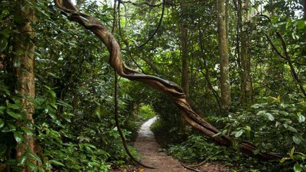 Cuc Phuong National Park - Ninh Binh Tour