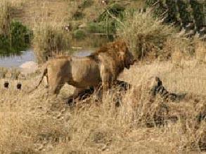 Serengeti National Park Package