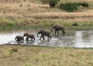 Tarangire National Park Package