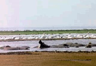 Lake Manyara National Park Package