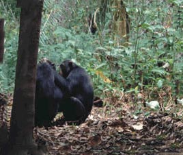 Gombe National Park Package