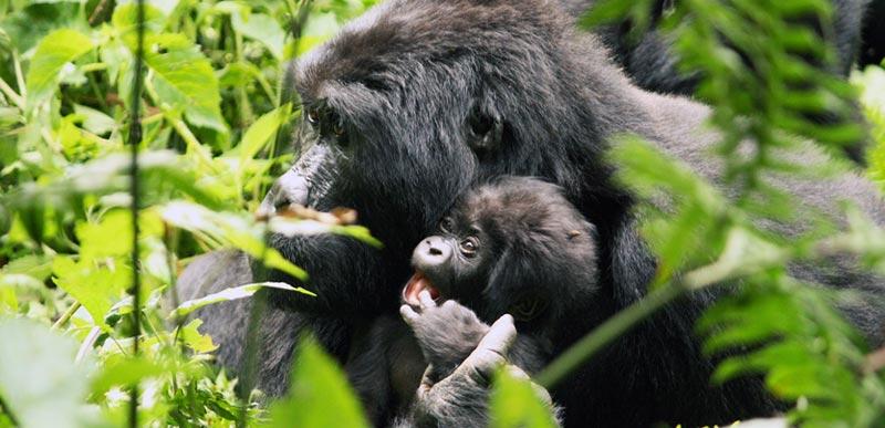 Rwanda Tour