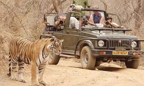 Marwad With Tigers National Park Tour