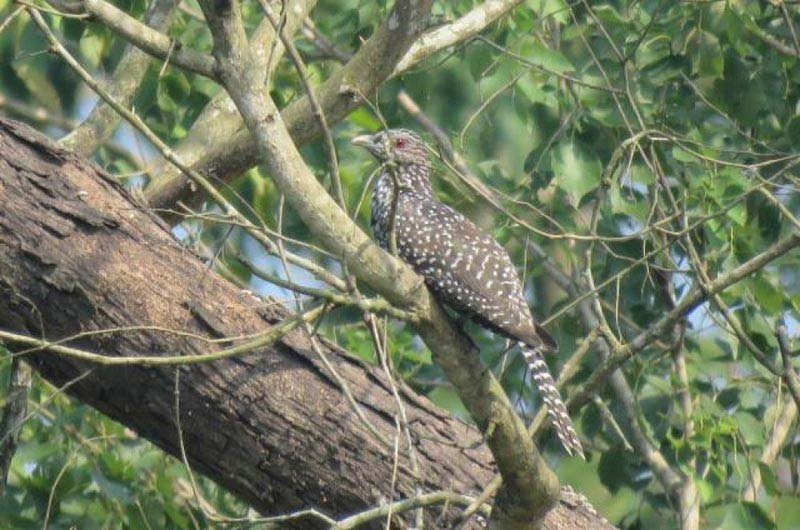 Chitwan Bird Watching Tour