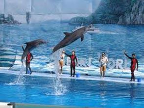 Dolphin Wolrd Agadir Tour
