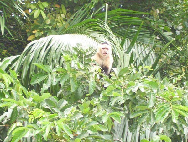 Rainforest Land And Water Expedition Tour