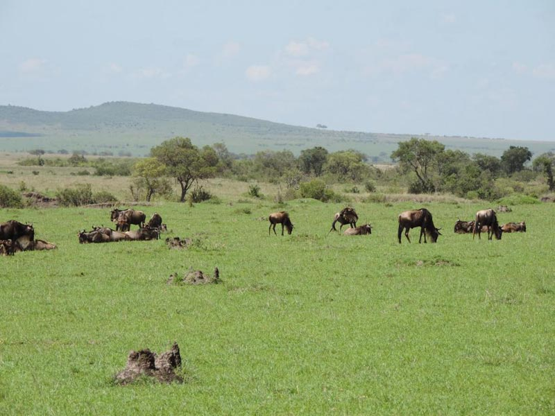 Kenya Cheap Budget Camp Traveler Safari Package