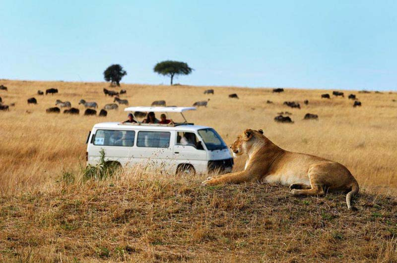 Masai Mara Tour Package