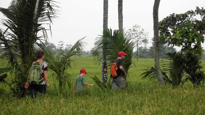 Lombok Rice Field Walk Tour Package