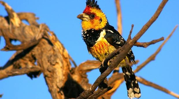 Lusaka To Livingstone Via Kafue National Park Package
