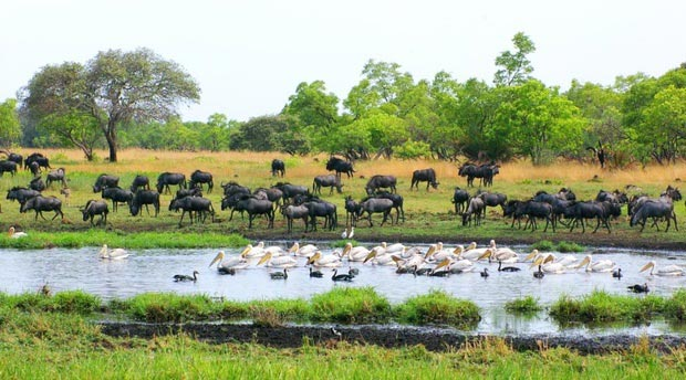 Lusaka To Livingstone Via Kafue National Park And Liuwa Plains National Park Package