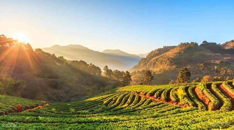 Honeymoon Tour - Northern Thailand