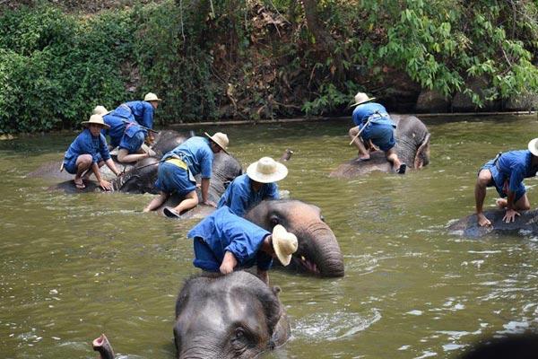 Lampang Mahout Training & Homestay Tour