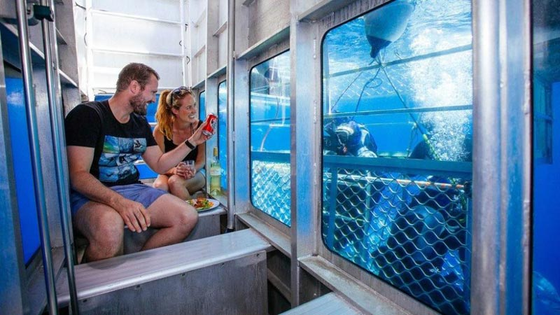 Wine & Dine With Great White Sharks Package