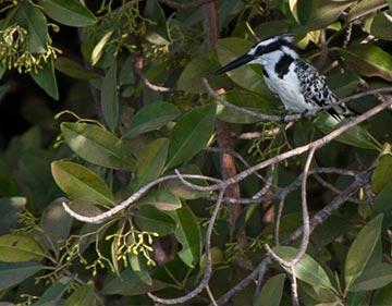 Bird Watching Experience By Kayak/ Canoe Package