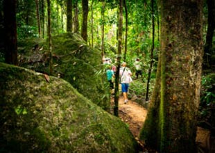 Mossman Gorge Dreamtime Walks Tour