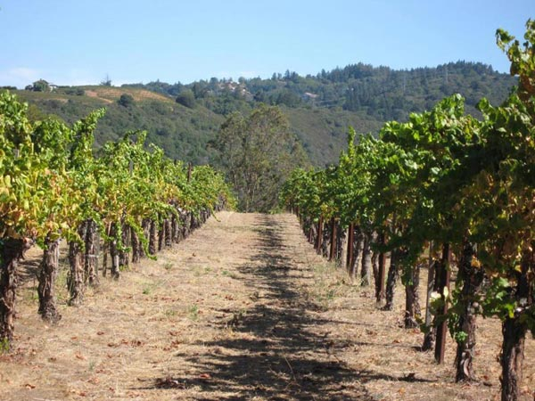 Wineries Tours - ½ Day Tour