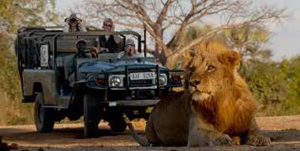 Safari And Cape Town Package