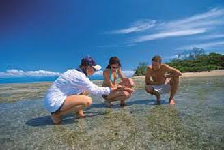 Windswell – Snapper Island Adventure Package