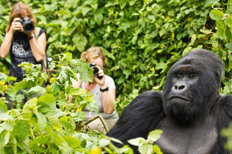 3 Days Uganda Gorilla Tracking Tour